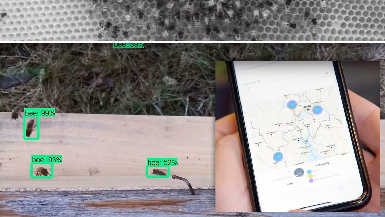 Norwegian development team won hackathon – using AI to understand the bee's dance